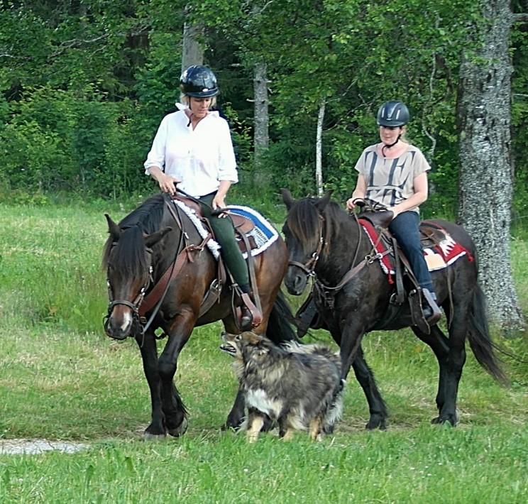ridgäster på tur med våra hästar Myrmin och Svarten.