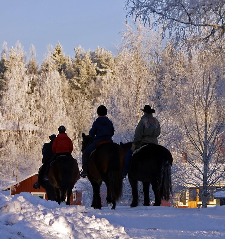 Vinterritt på Silverhill Stable